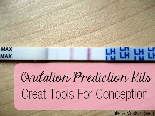 Ovulation Predictor Test Clomid
