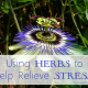 Using Herbs to Help Relieve Stress